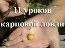 11 уроків коропового лову
