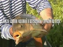 Лов коропів маховий і штекерной вудкою на озері