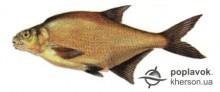 Риба Лящ