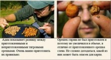 Революція зернових сумішей