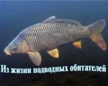 З життя підводних мешканців